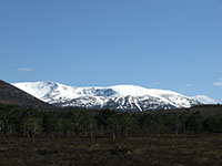 Braeriach from the Rothiemurchus Forest